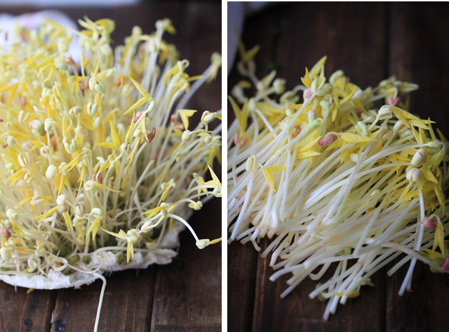 homemade mung bean sprouts